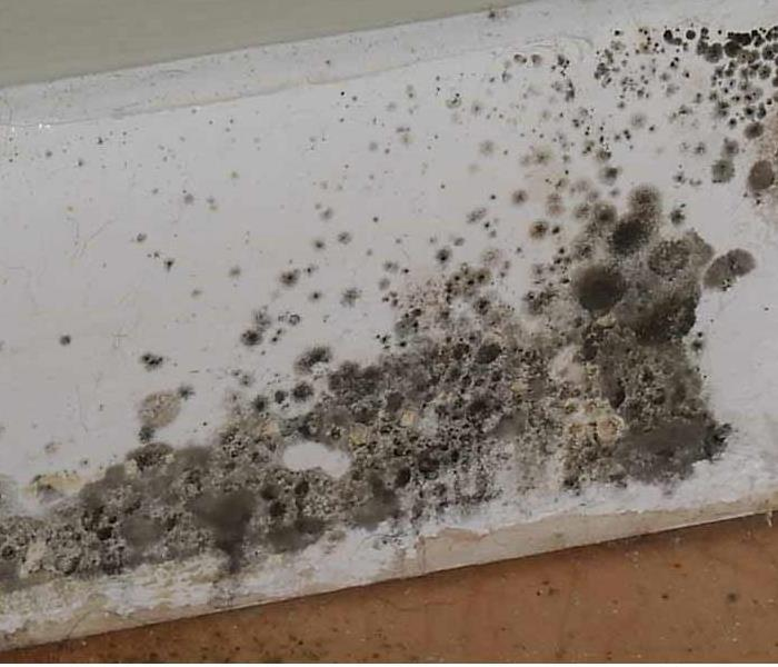 Mold spores growing on baseboard