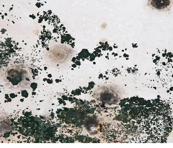 Mold Remediation Wicomico, Somerset, and Worcester Residents:  Follow These Mold Safety Tips If You Suspect Mold